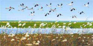 甘肃省林业部门2600斤粮食助候鸟越冬