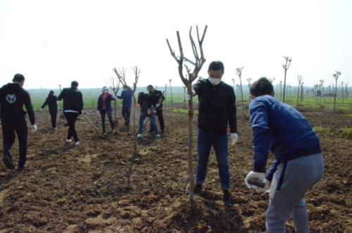 邮储银行甘南州分行组织开展义务植树活动