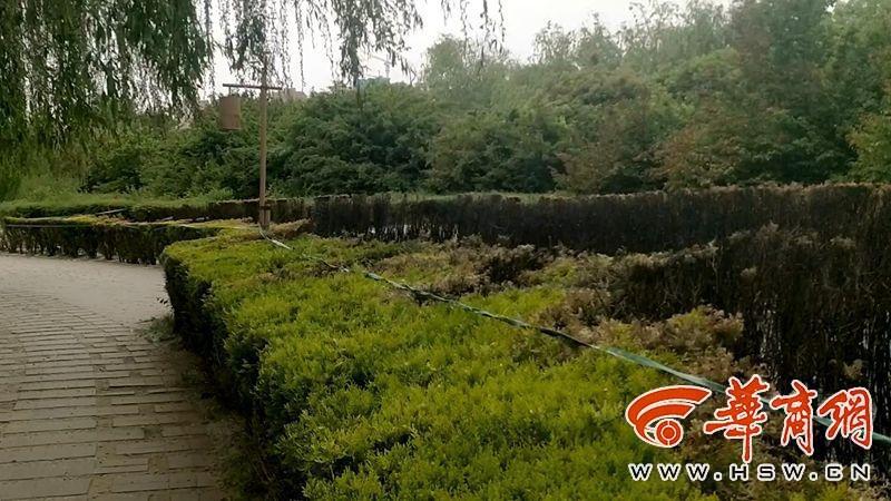 咸阳湖景区一游客扔烟头引燃绿化带柳絮
